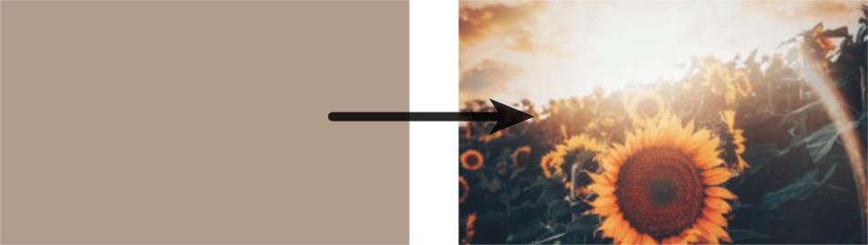 Aus einem hell-braunen Platzhalter wird ein Bild